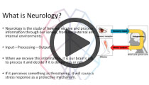 Integrated Kinetic Neurology